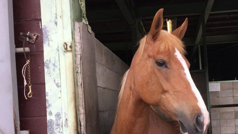 横を向いている馬