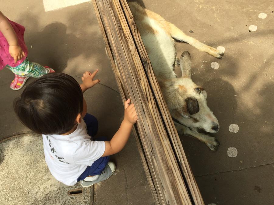 動物を見る男の子